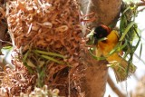 village weaver working