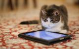 Cat & iPad