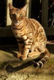 Joli chat de passage