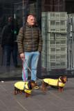 Art moderne caninou les gilets jaunes