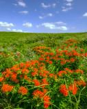 Kansas Prairies