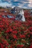 Blueberry barrens near Peggys Cove, Nova Scotia