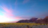 Field of Desert Sunflowers at Sunset, Death Valley National Park, CA