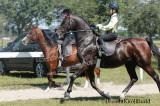 horse watermark .jpg