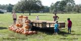 Pumpkins!!!