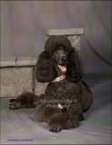 0298 Bella Rose darker laying.jpg