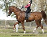 85 Blake Slepecki on Sultan's Lucky Flair; Barn Serenity