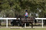 Serenity Saddlebred Horse Show Feb 23rd, 2014