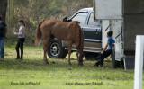 Photos of the Horse Show around the Serenity Farm