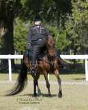 140 Stephanie Shimer on Sassafrass Hills Second the Motion, Five Gaits Stables