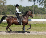 144 Danielle Frances on Sunny Acres in a Flash, Arbordale Riding Academy