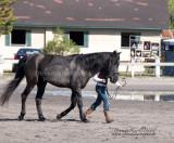 7. Ponies and Minis (Mares & Geldings)