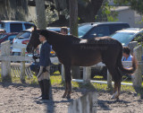 37.	Beginner English Horse Showmanship