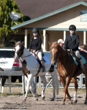 41.	Beginner Rider Walk/Trot Equitation