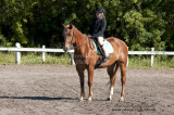 42.	Beginner Rider Walk/Trot Pleasure