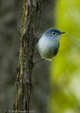 Bird Photography from Centre County PA Updated for 2016