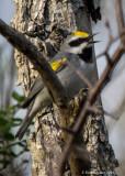 recent_bird_photos_from_centre_co_pa