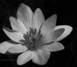 Black & White: exploration of the concept