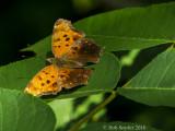 Butterflies, Moths etc: Macro Insects 2012 - 2016