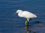 Wading Waterbirds