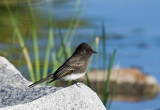 San Diego birds 2013