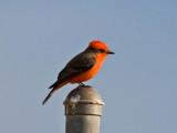 San Diego birds 2014