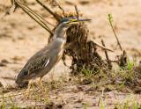TANZANIA 2013: VOGELS/BIRDS