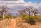 Baobabbos