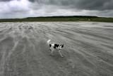 51: stormy beach