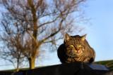 Oudeschild kat