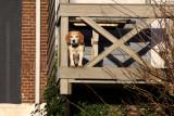 Oudeschild hond