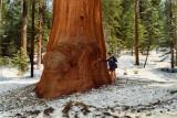 1983 Sequoia Park