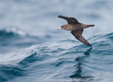 Birds -- Pelagic outings