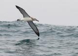 Birds -- Half Moon Bay Pelagic, July 26, 2014