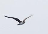 Birds -- Monterey Bay Pelagic, September 11, 2014