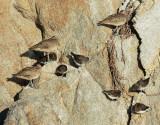 Rocky Shore Birds