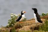 Voyages et excursions ornithologiques