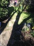 long shadows-IMG_4613.jpg