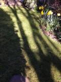 long shadows-IMG_4611.jpg