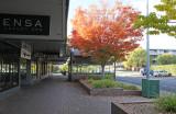 Autumn on Kennedy Street