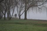 Foggy Figures