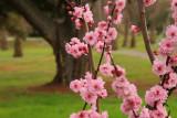 Spring is Just Around the Corner