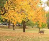 Yellow Park