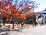 Woden Square in Autumn