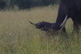 A Return to Kenya, 2012