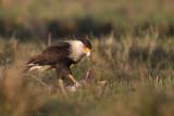 Florida Wildlife Blog 2014