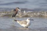 San Carlos Bay: Bunche Beach Preserve
