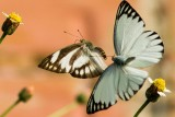 White Brown Veined and Diverse White