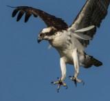 Osprey-4R.jpg