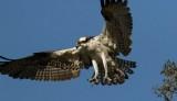Osprey-6R.jpg